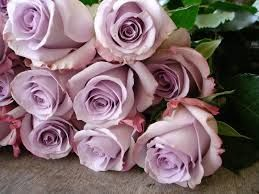 Dusky Pink Roses Names Google Search