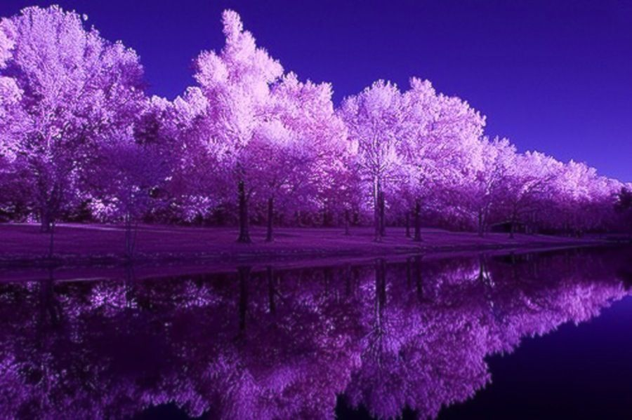 Wallpaper Beautiful Water Nature Violet Outdoors Purple Large Jpg 900 599 Purple Trees Cool Landscapes Nature Photography