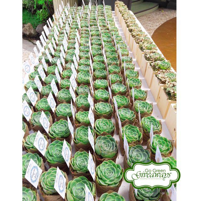 Succulents arrangement, succulents Philippines, Philippine