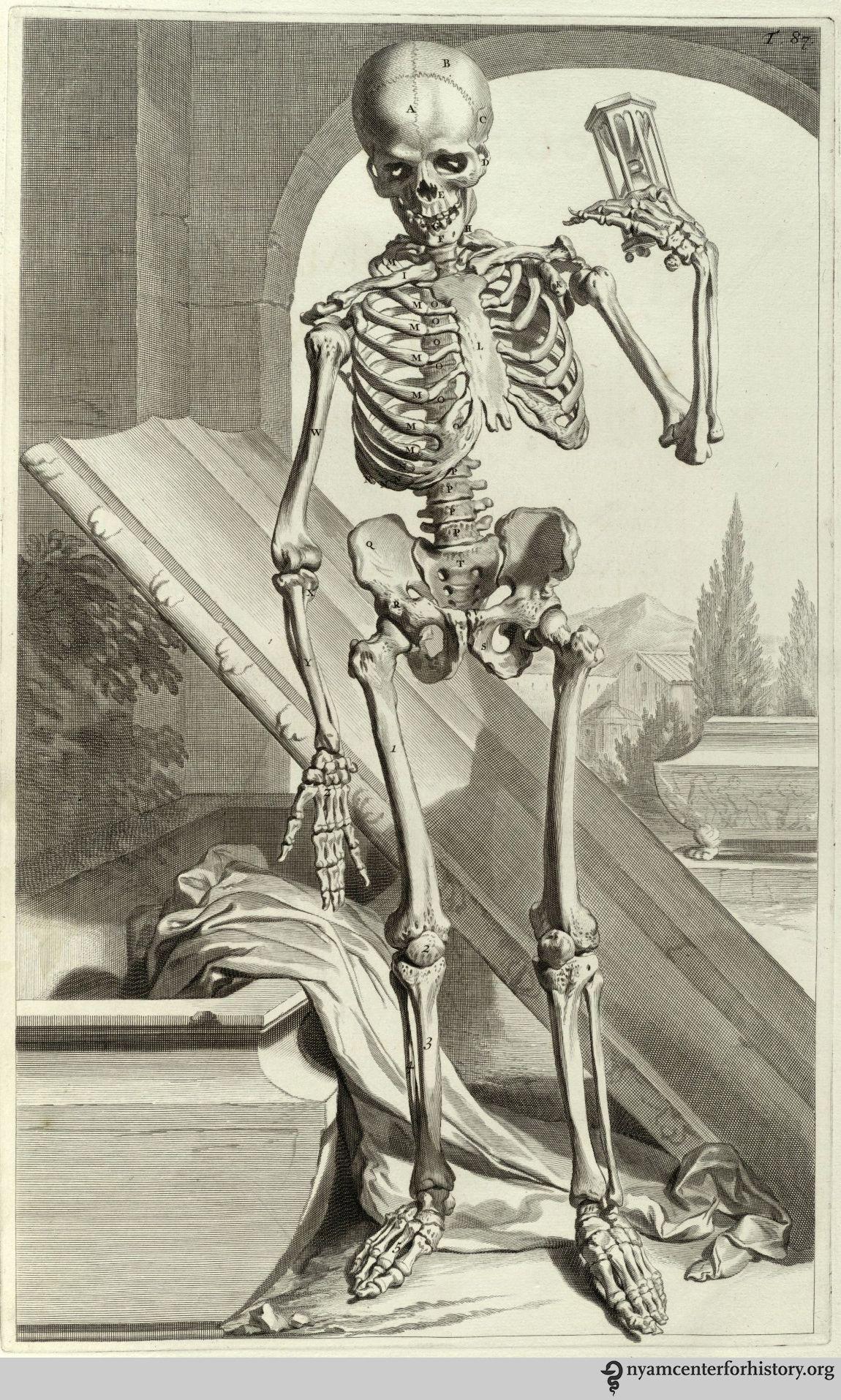 Godefridus Govert Bidloo (1644-1713). Anatomia humani corporis ...