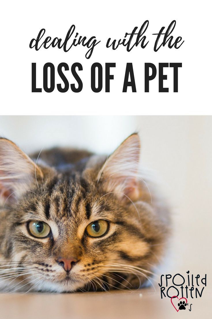 Dealing with the loss of a pet Death of a pet, Pet grief