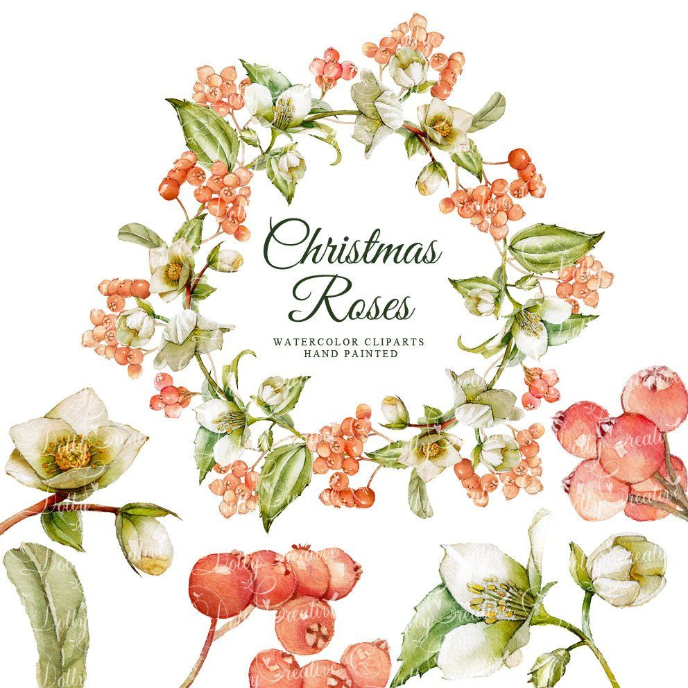 Photo of Christmas roses, christmas watercolor, watercolor clipart's, hand painted 5 clipart's without background, 5 png files – 300 dpi