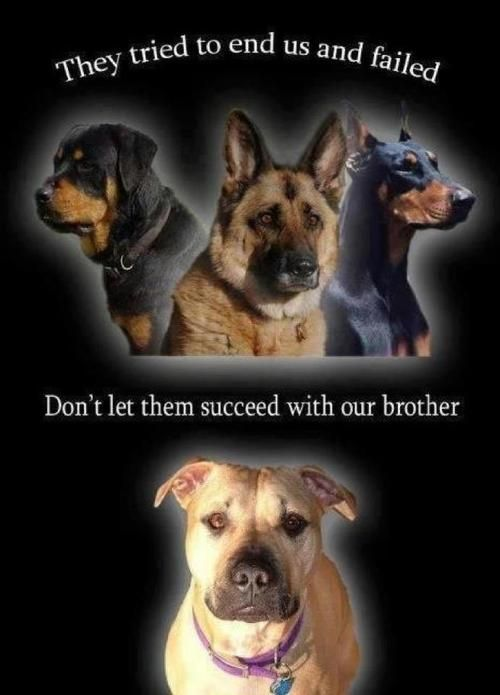 Stand Up For The Pitbulls Pitbulls Dogs Dog Love