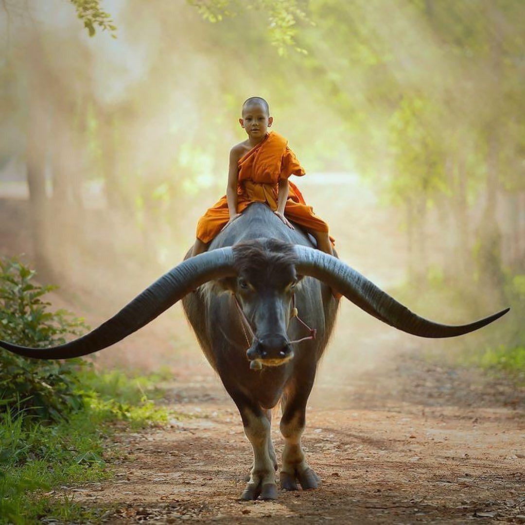 Thailand Photo by saravutwhanset Animales
