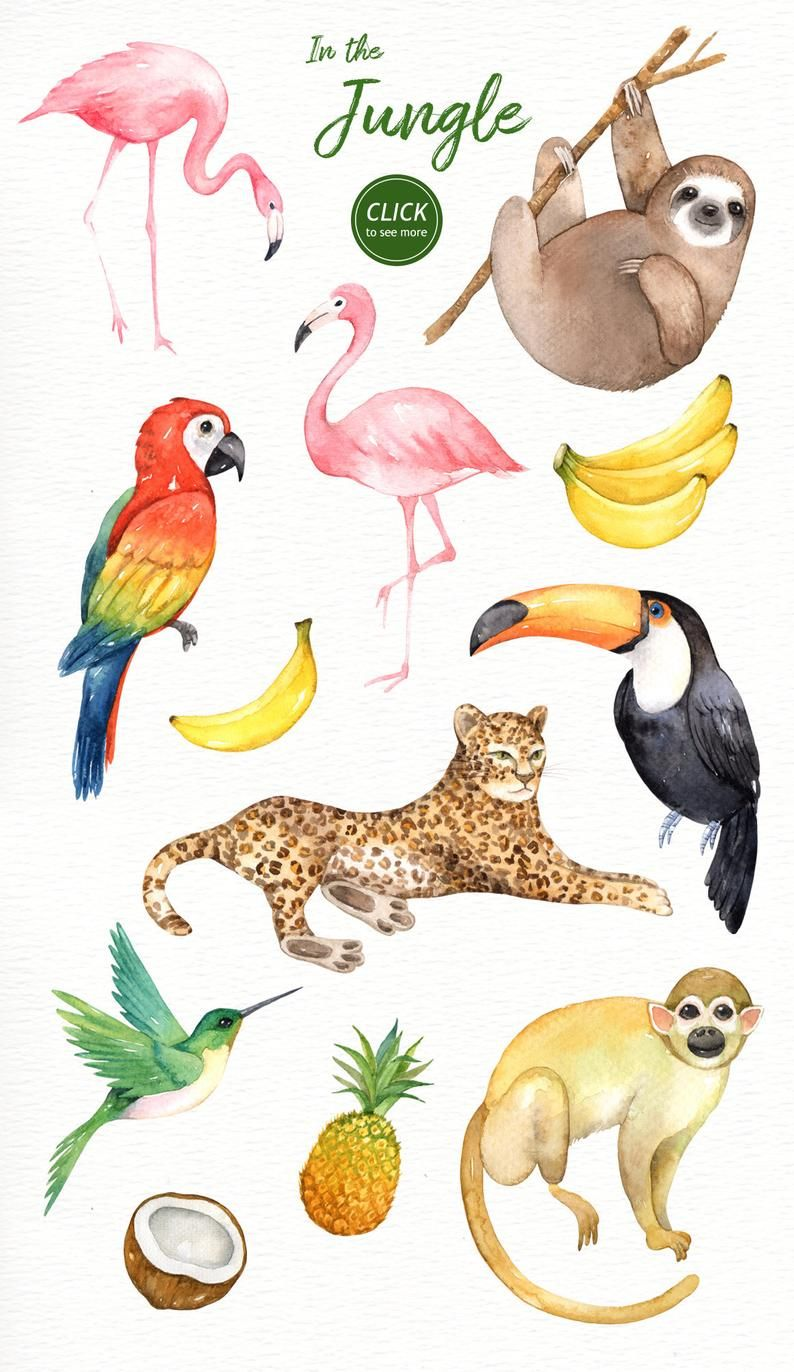 In The Jungle Watercolor Clipart Woodland Animals Kids Clipart Nursery Decor Watercolor Leaf Wedding Clip Art Tropical Clipart Sloth In 2021 Jungle Animal Art Jungle Watercolor Tropical Illustration