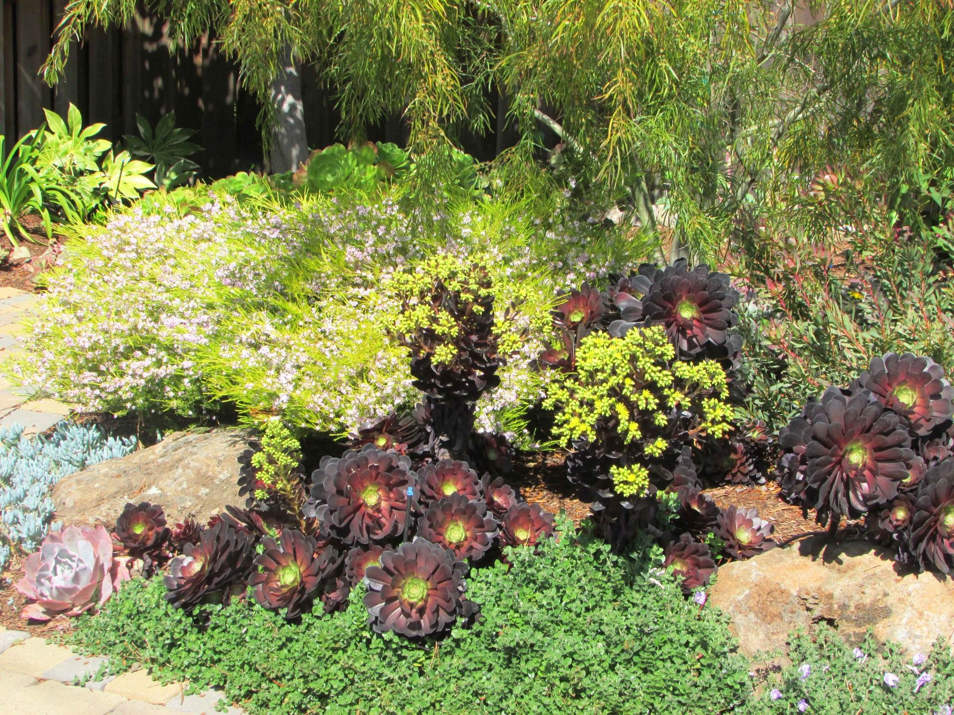 Low Water Garden With Shrubs And Succulents   Yahoo Search Results Yahoo  Image Search Results