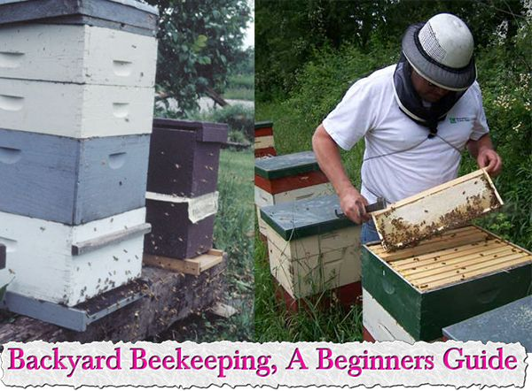 Backyard Beekeeping, A Beginners Guide