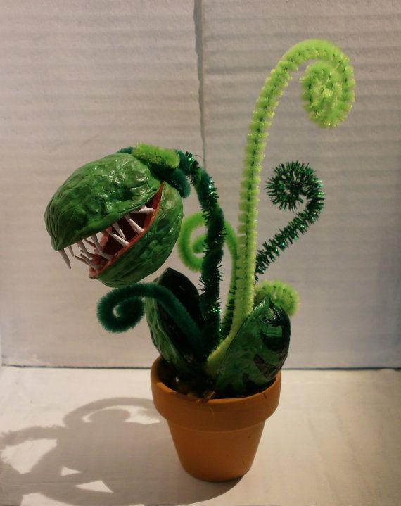 Fleischfressende dekorative Miniatur immergrüne Pflanze - jetzt in weiteren Farben