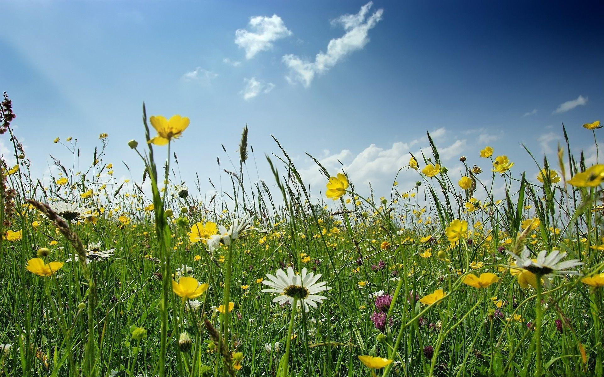 Field of Wildflowers Wallpaper Wildflowers HD Wallpaper