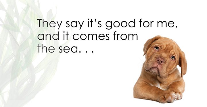Sea Vegetables And Their Health Benefits For Dogs Dogs Naturally