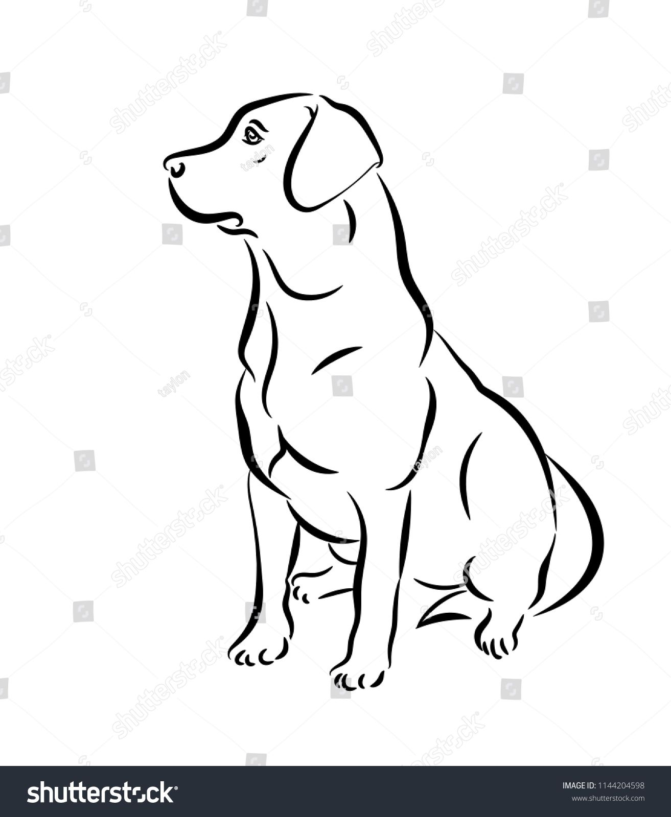 labrador vector illustration black and white outline of a