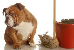 Your dog's behavior will change when you change!  http://www.petiquettedog.com/dog-behavior/dogs-behavior-change-change/