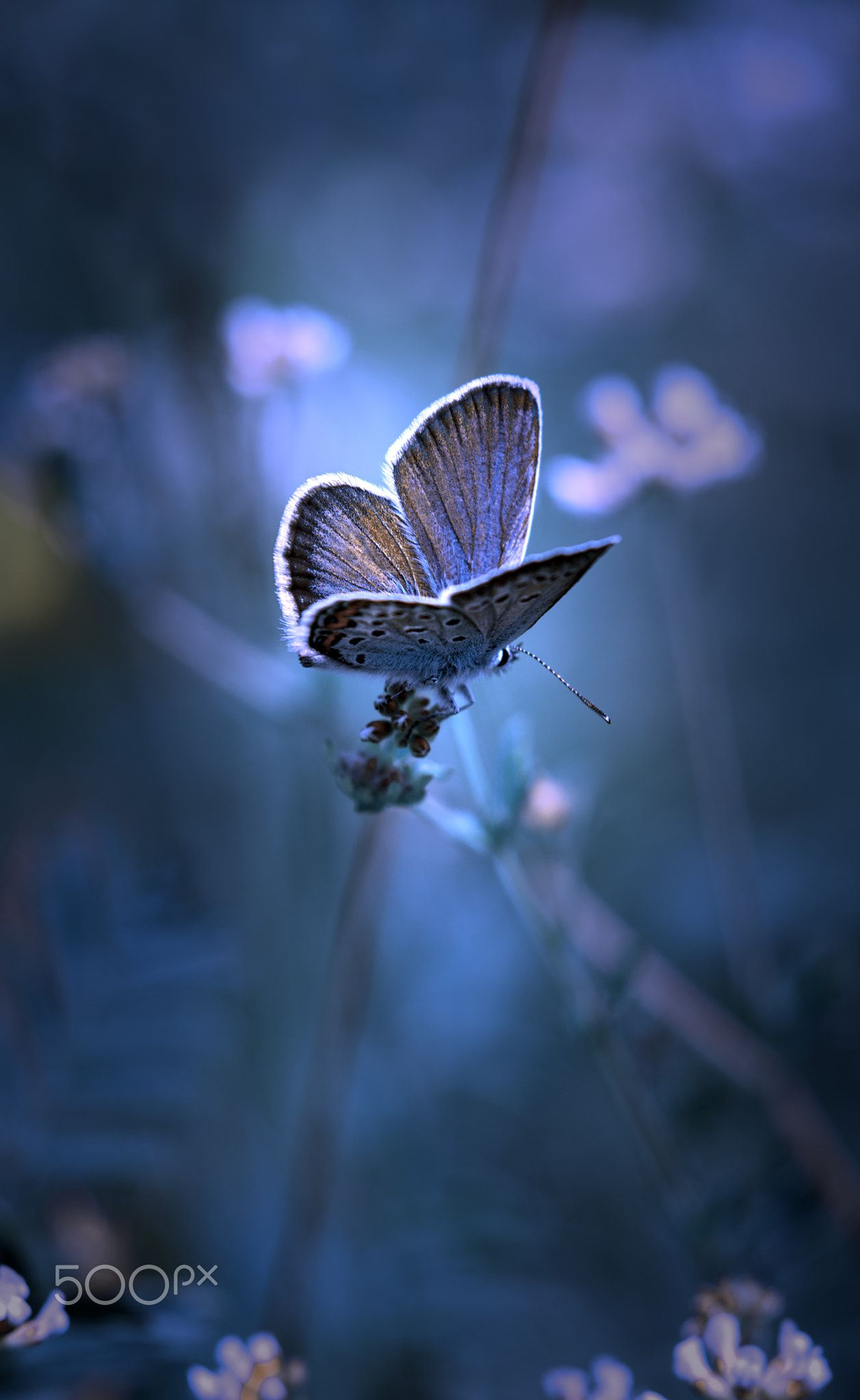 Butterfly Nature Impression Beautiful Nature Pictures