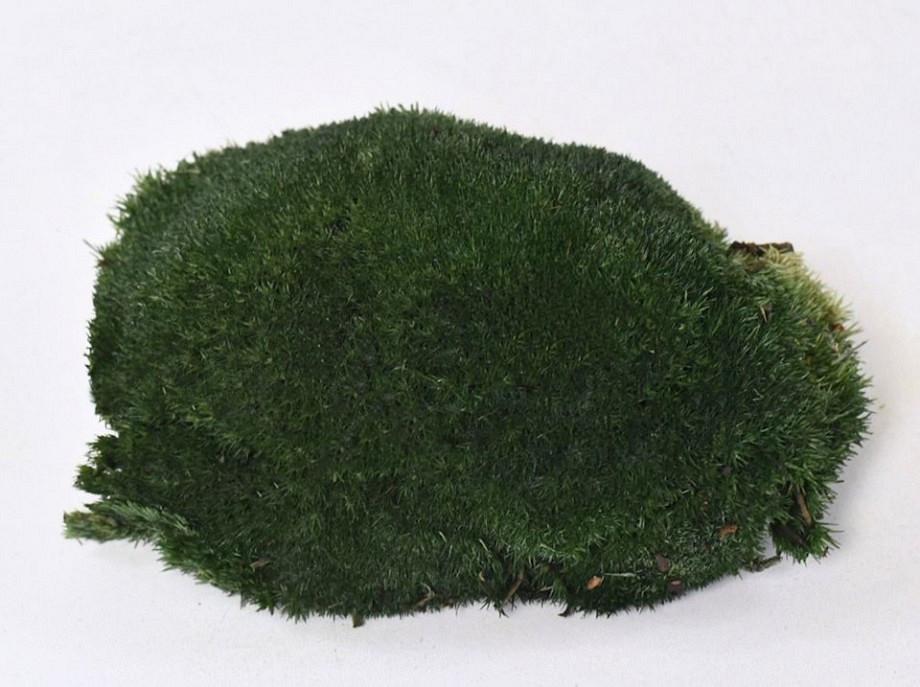 Bolmos Donkergroen Groothandel Decofleur Groen