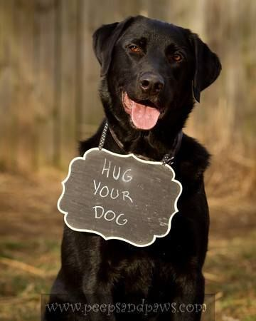 I Love Labradors Facebook Dogs Labrador I Love Dogs