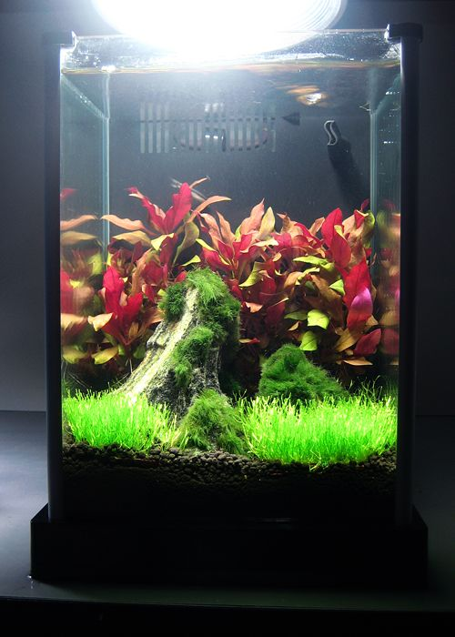 Pin On Aquascaping Live Plants