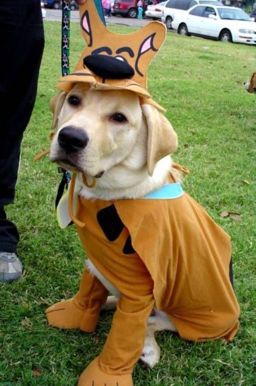 Fifteen Absolutely Absurd Dog Costumes Scooby Doo Dog Costume