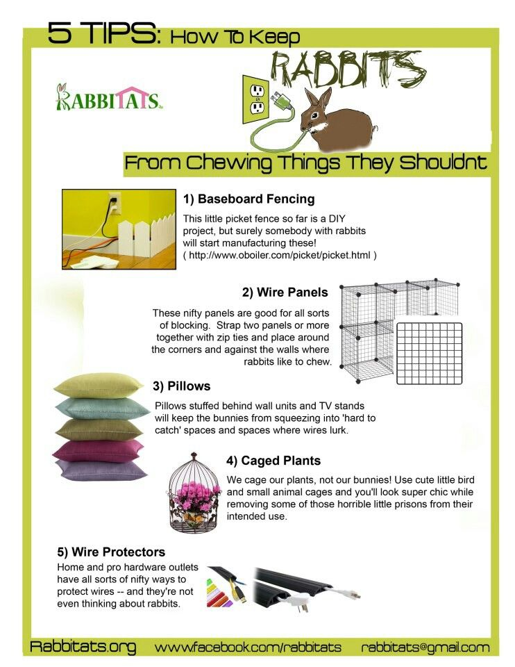 Tips for a rabbitproof home