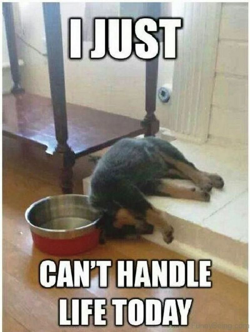 81 Funny Life Memes To Motivate And Inspire You In 2020 Life Is Good Animal Pictures For Kids Funny Animal Memes Funny Dog Memes