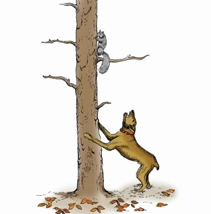 How To Choose And Train A Good Squirrel Dog Squirrel Hunting