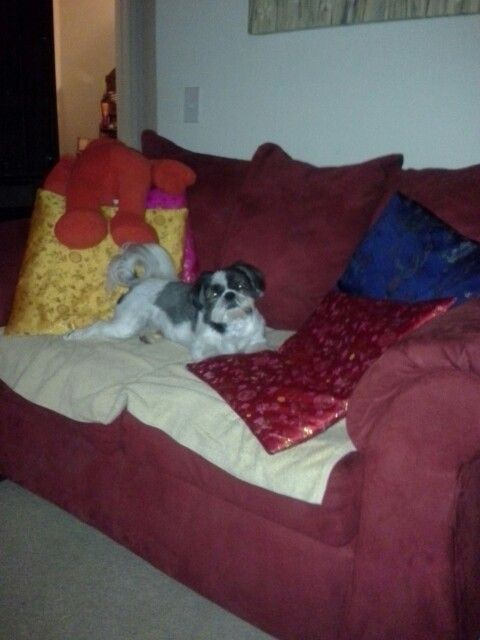 Yes I'm on the sofa have a problem  deal with it