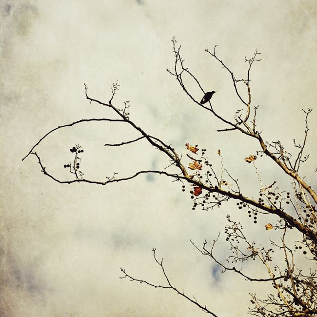 #Magpie in tree in autumn.