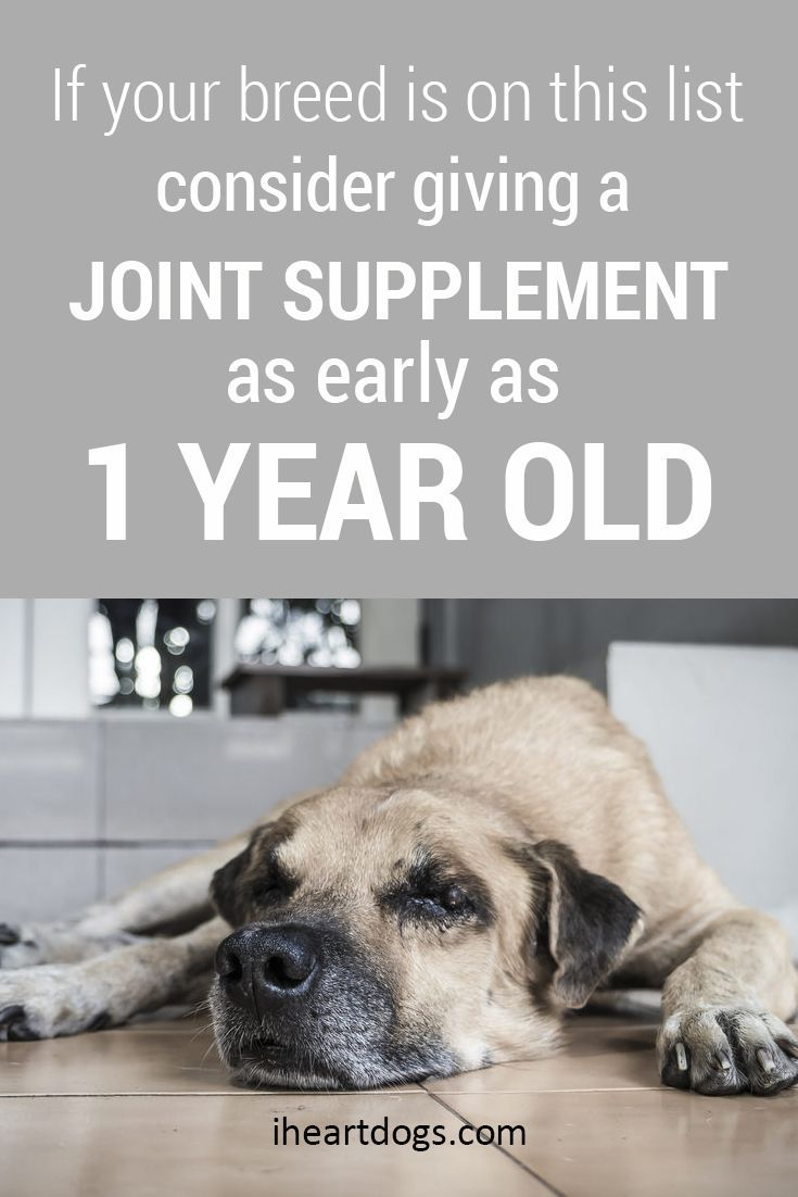 If Your Breed Is On This List Consider Giving A Joint Supplement
