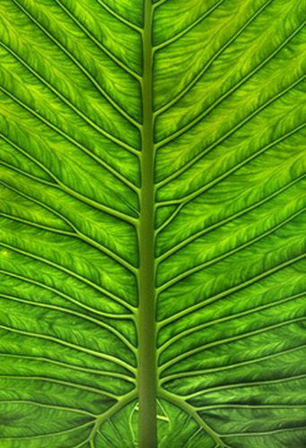 Leaves Leaves Shades Of Green Patterns In Nature