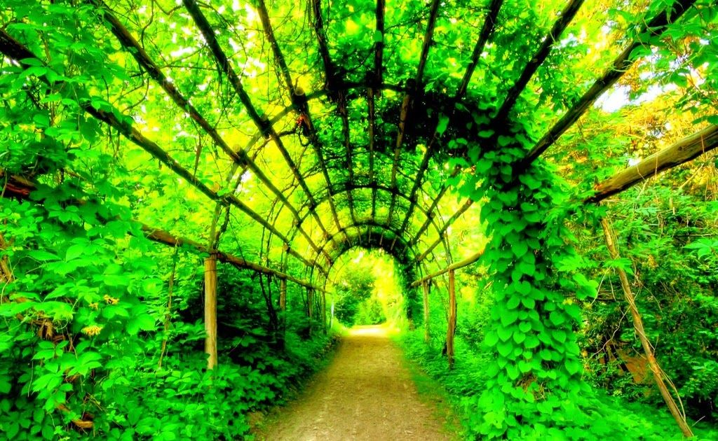 23 Wallpaper Nature Green Garden Beautiful Green Nature Wallpapers Hd Pictures Free Download Green Natu In 2020 Beautiful Gardens Best Vacation Spots Amazing Gardens