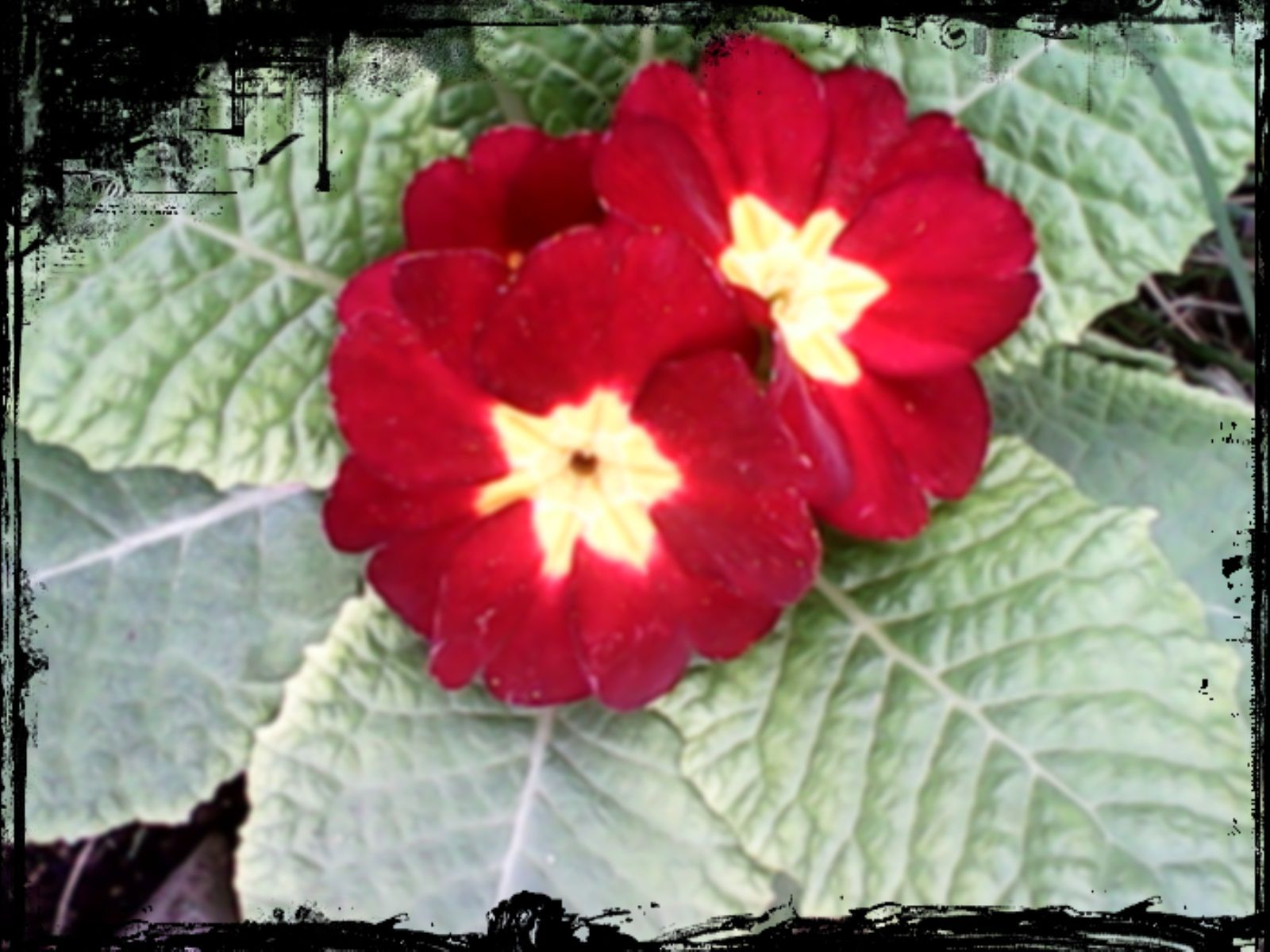 Flor casa Marce