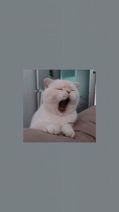 Pin auf Kitten