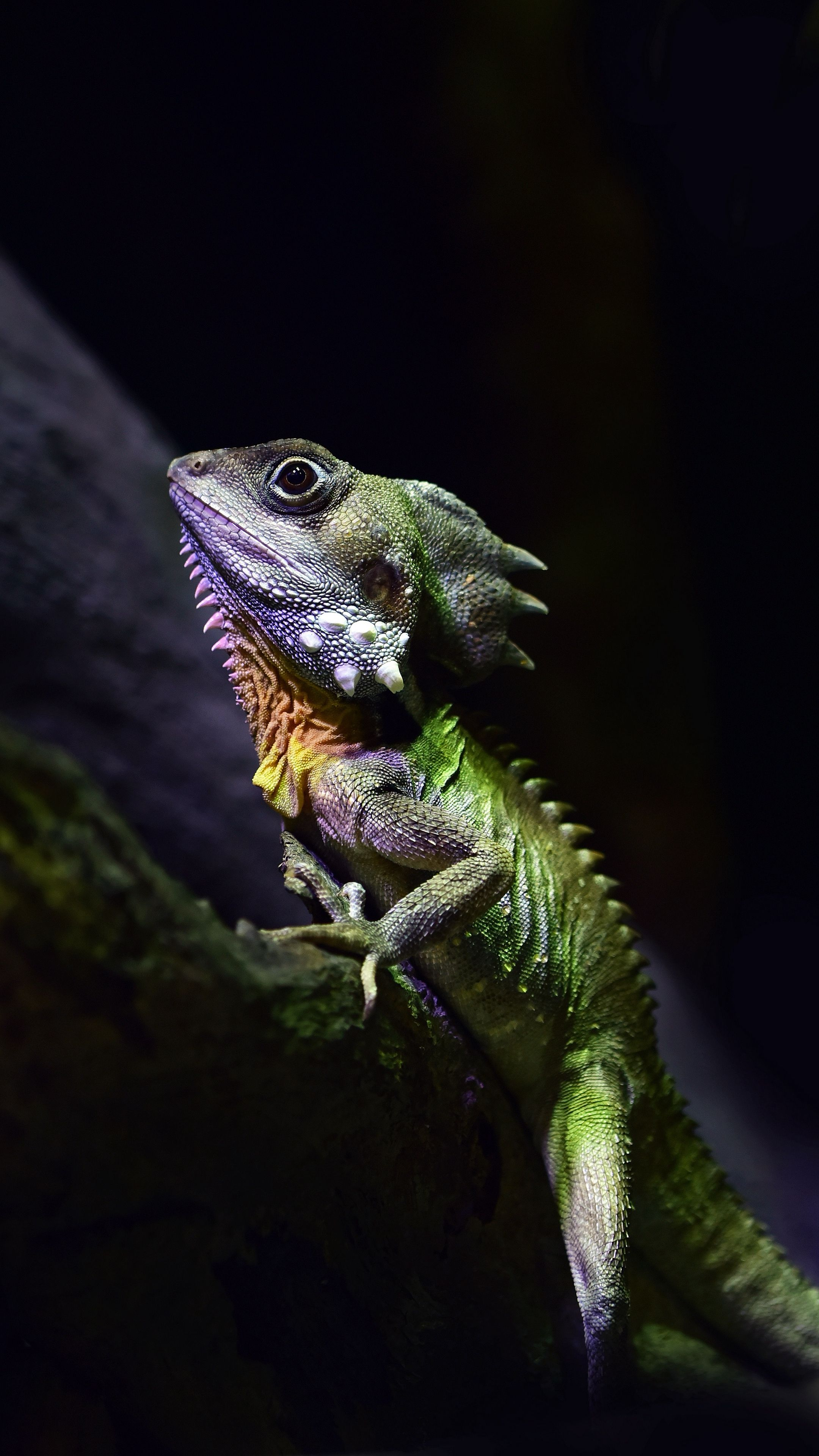 H D Reptiles #Animals #boydsforestd...