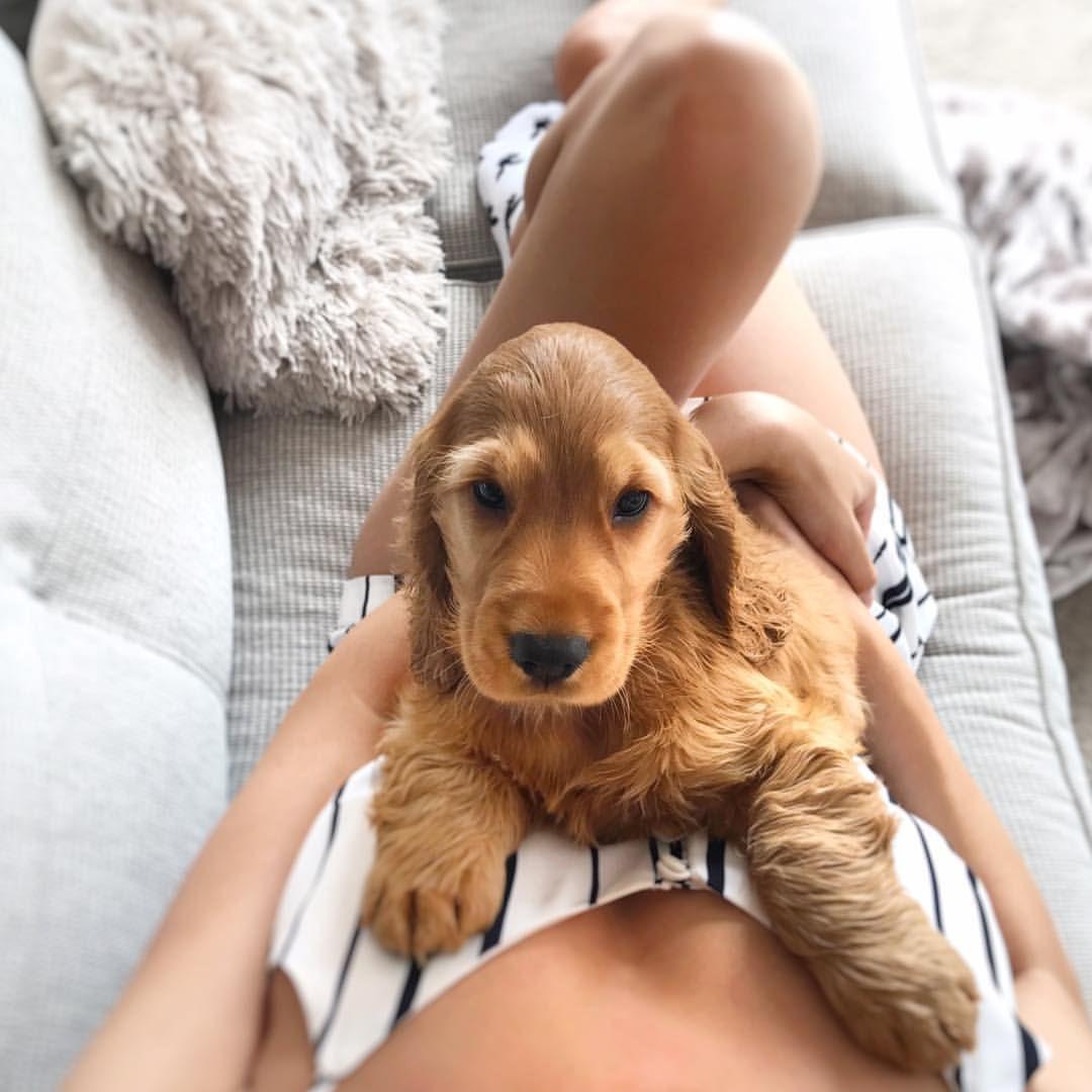 Pin On Precious Pups