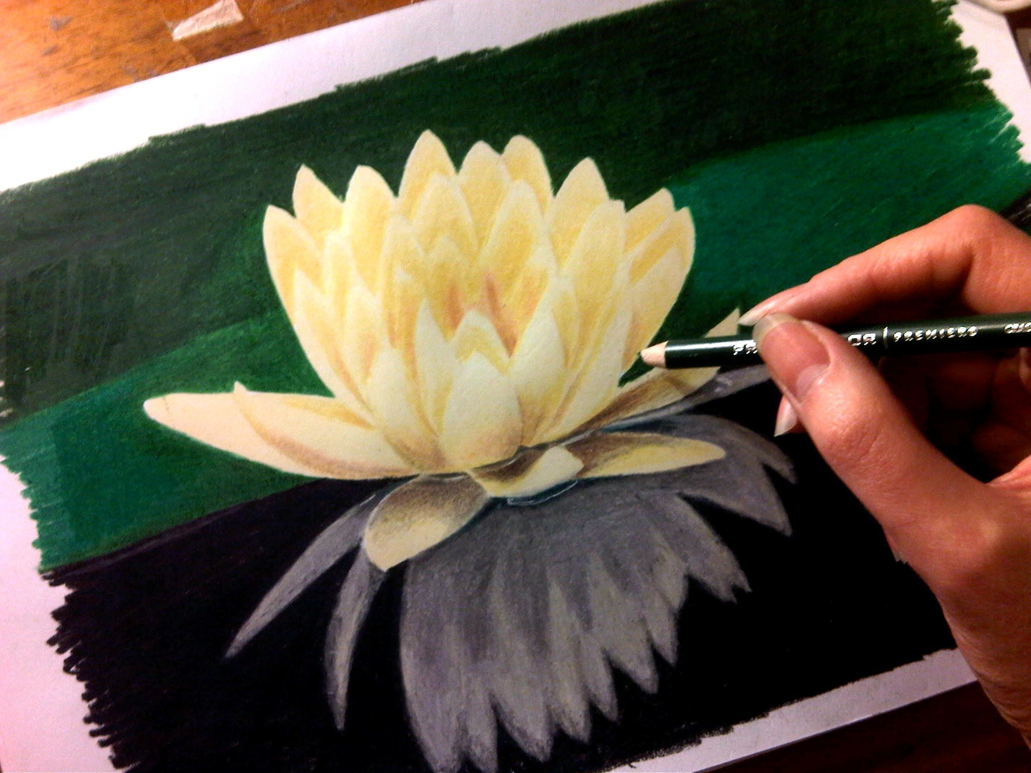 Time lapse drawing of flower water lily from how to draw time lapse drawing of flower water lily from how to draw izmirmasajfo