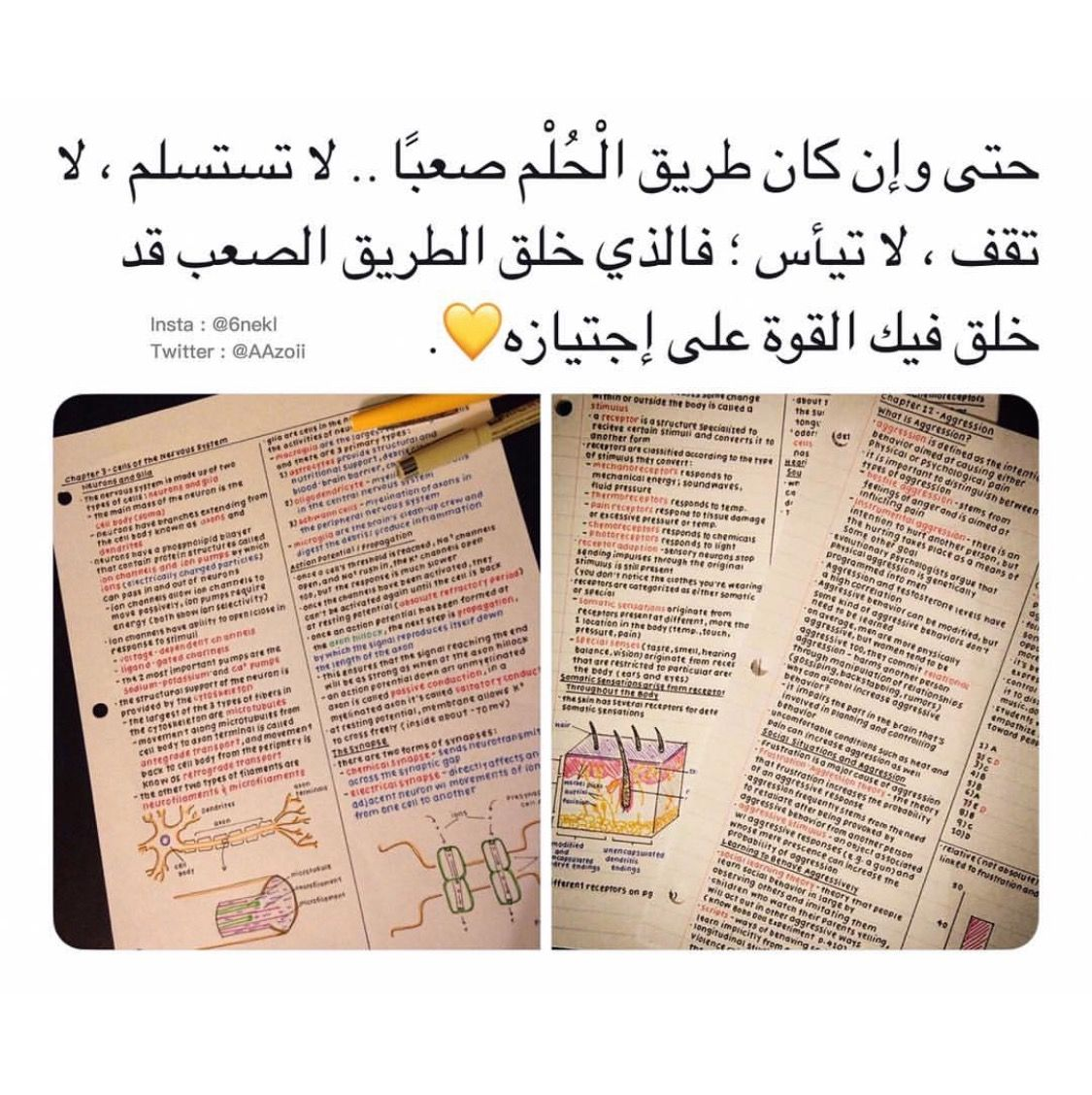 Pin By Sawsan Al Aqtash On حلم الطفولة Childs Dream Study Motivation Quotes Study Quotes Inspirational Quotes Pictures