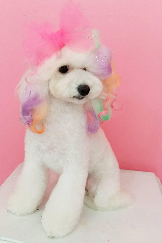 Repinned More Beautiful Creative Dog Grooming Dog Grooming Poodle Dog Grooming Creative Grooming