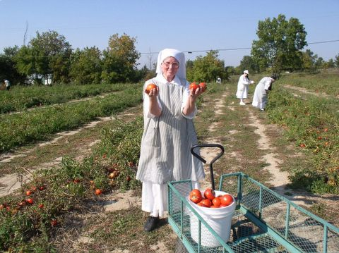 Sr. Agnes is happy to show off her ripe juicy tomatoes!
