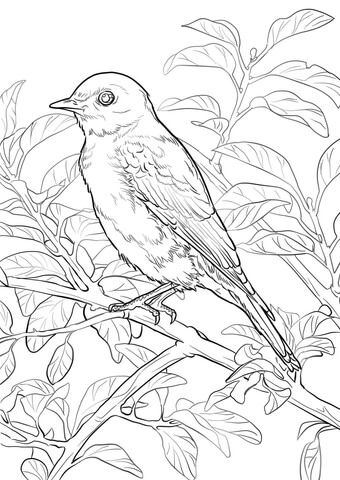 http://animalia-life.com/image.php?pic=/images/bluebird-coloring ...