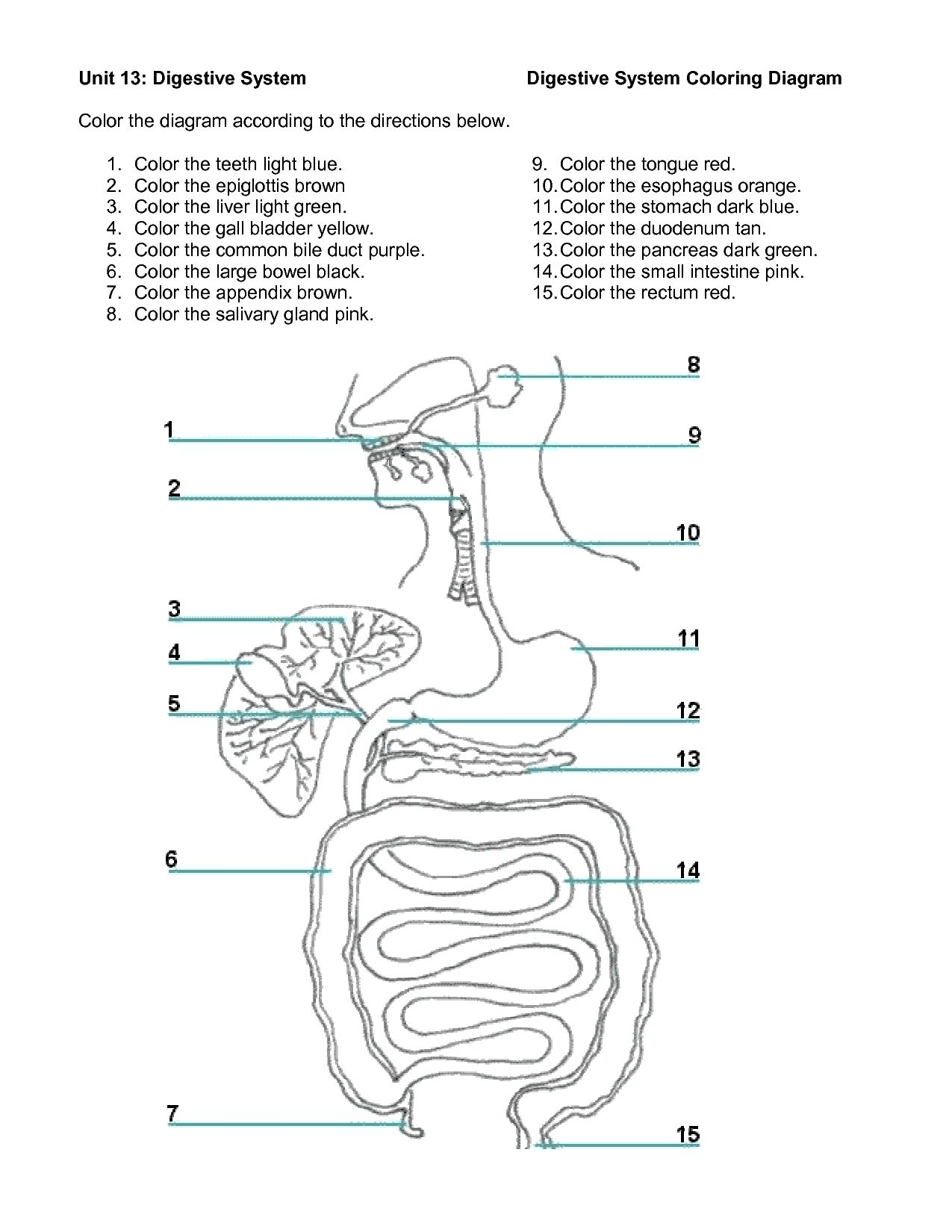 Digestive System Diagram Worksheet Versaldobip
