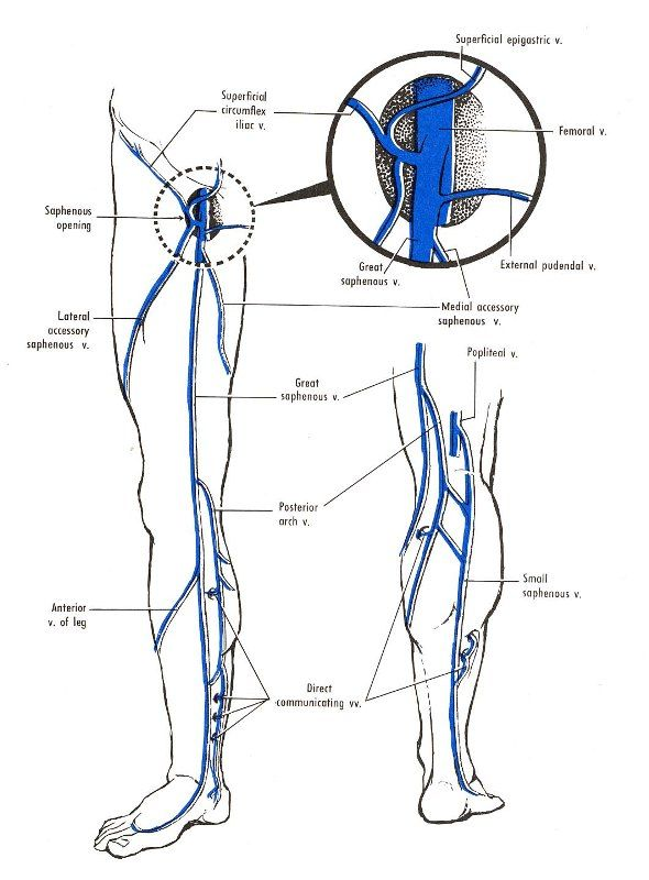 Venous Drainage of Lower Limb | Health & Disease | Pinterest
