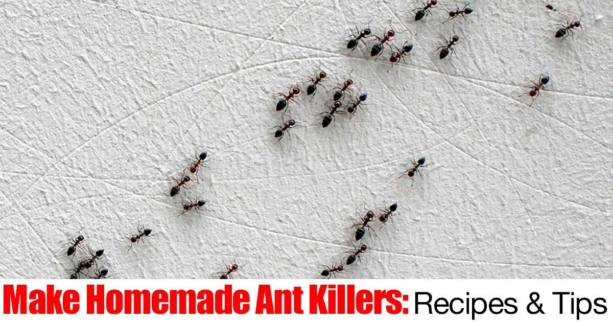 Ants in your plants? Ants indoors or outdoors are a problem. First, ants are farmers, understanding basically how they live and thrive is helpful in trying to control them. You have to ask yourself when they are in plants... What are they farming? What is it that attracts them to... #fal #spr #sum