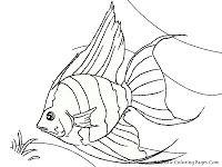 Angelfish Printable Coloring Sheet Realistic Fish Coloring Page