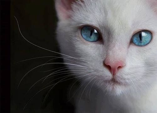 White cats are beautiful (30 photos):