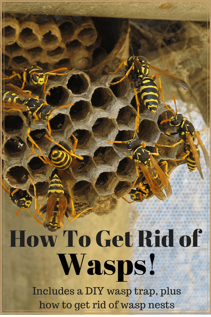 Get rid of wasps and enjoy your yard/garden again! # ...