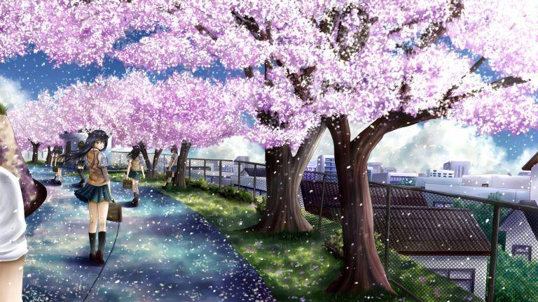 Anime Cherry Blossom Full Hd Wallpaper Anime Cherry Blossom Cherry Blossom Pictures Anime Wallpaper Phone