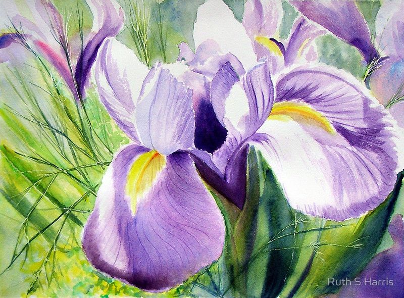 Sundrenched Iris By Ruth S Harris In 2019 Iris Art Flower