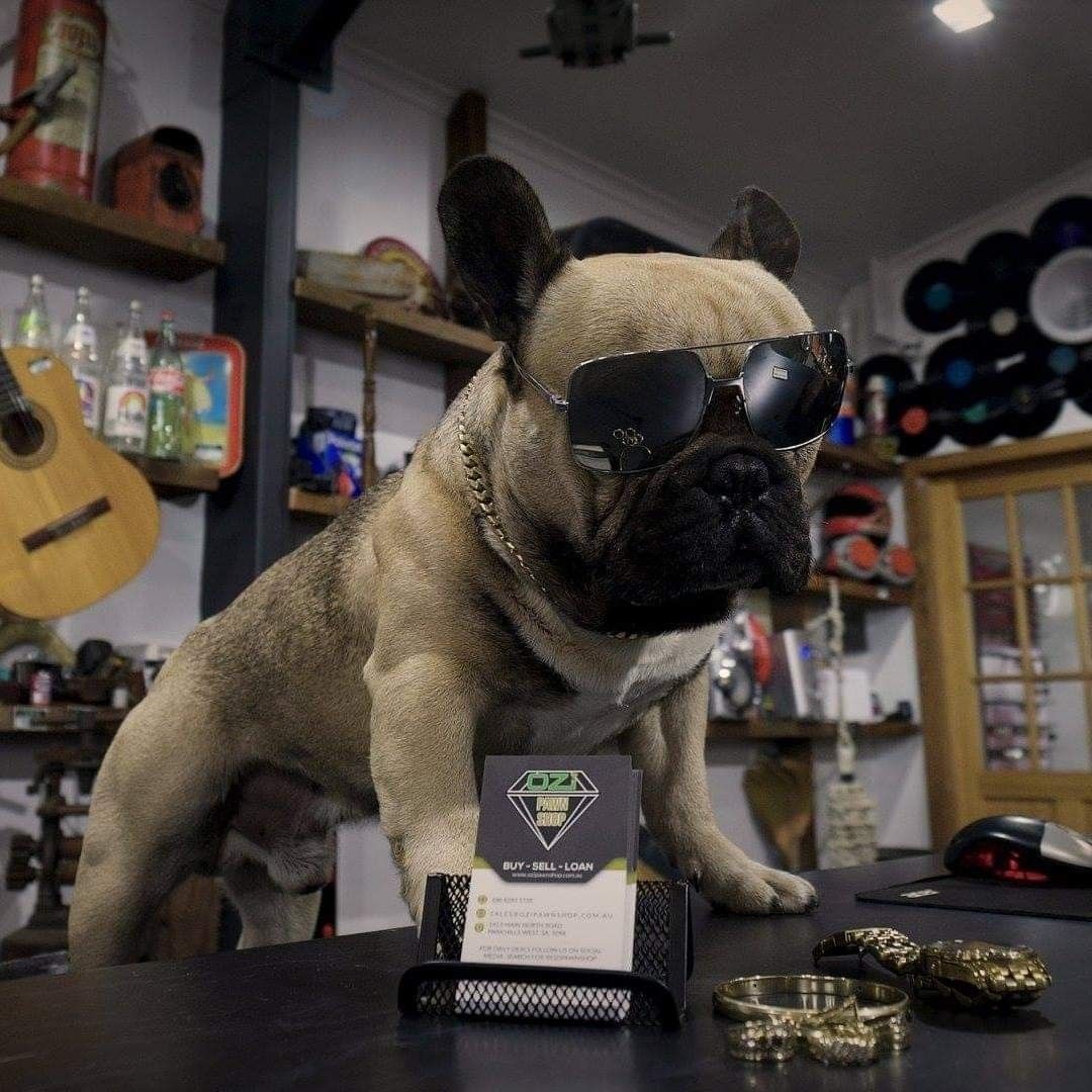 Antique Dealer Dog Dogs French Bulldog Antiques