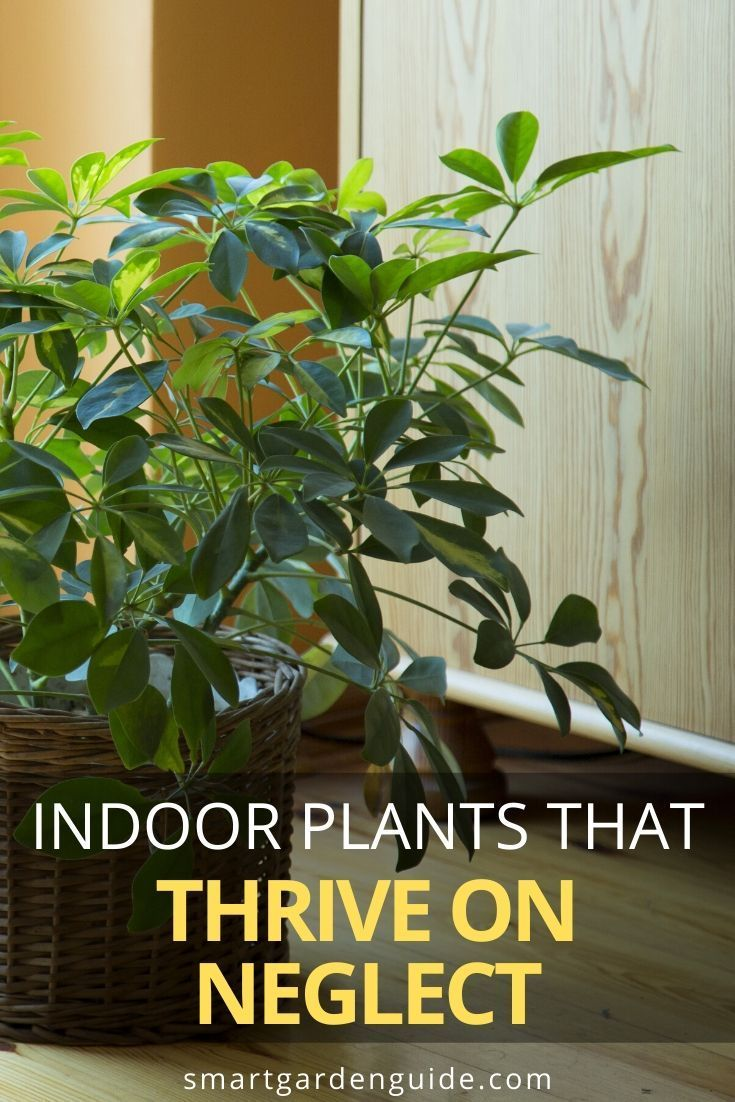 25 Hard To K*Ll Houseplants That Will Thrive In Your Home 640 x 480