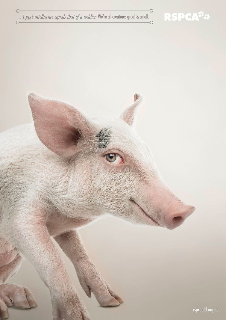 Rspca Ads Show Animals Human Side Animals Pig Advertising