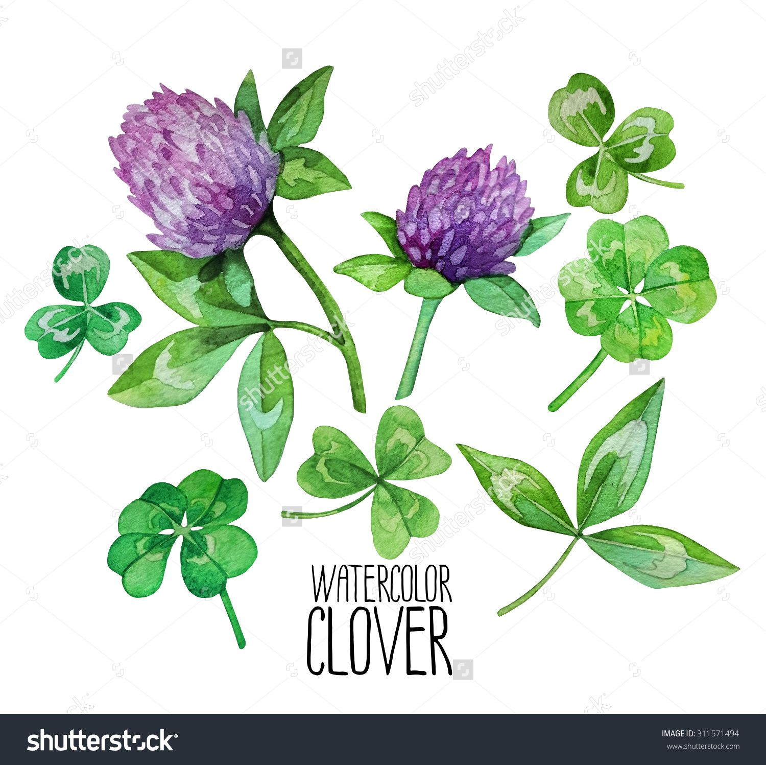 flowering clover watercolor google search mrs vessel tat